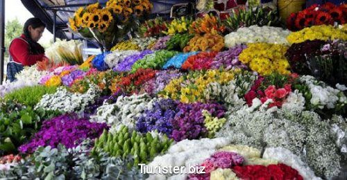 اکوادور کشور گلهای رنگارنگ